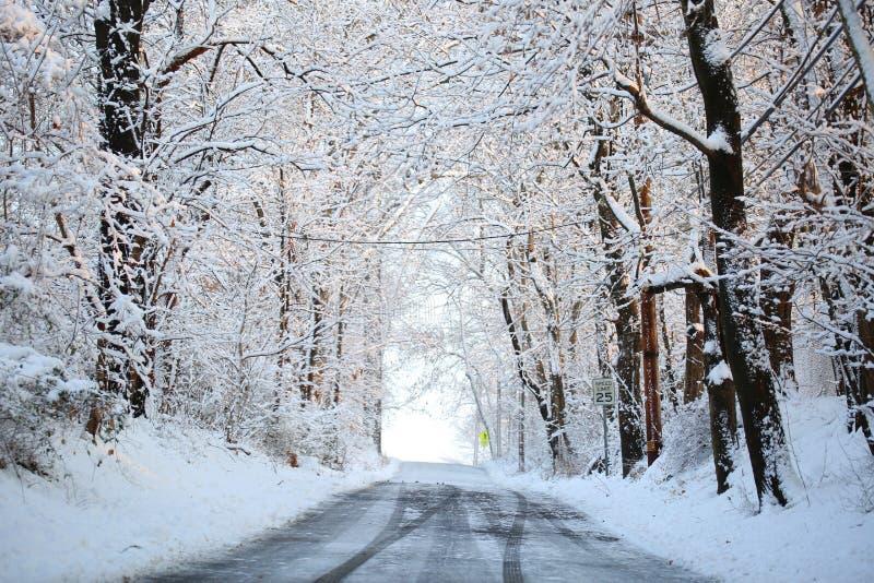 Callejón del invierno con los árboles nevados. fotografía de archivo