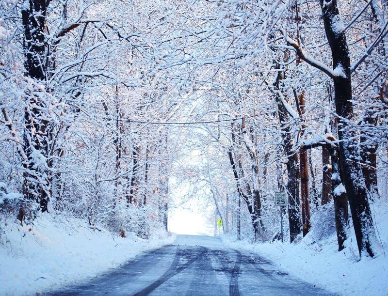 Callejón del invierno con los árboles nevados fotos de archivo