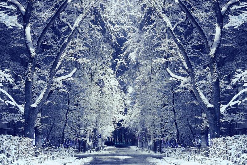 Callejón del invierno de la noche del parque de la ciudad foto de archivo