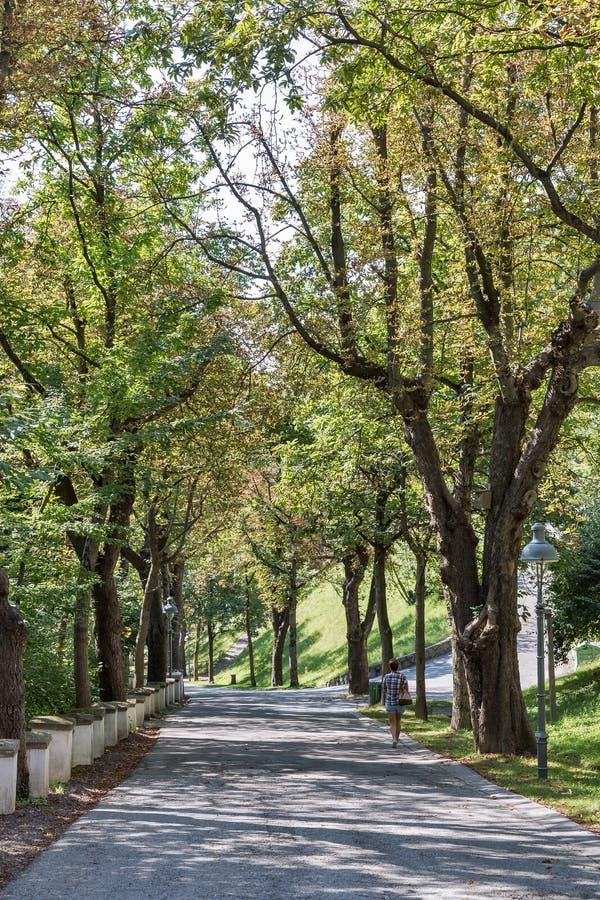 Callejón del otoño del parque de Schlossberg en Graz fotos de archivo libres de regalías