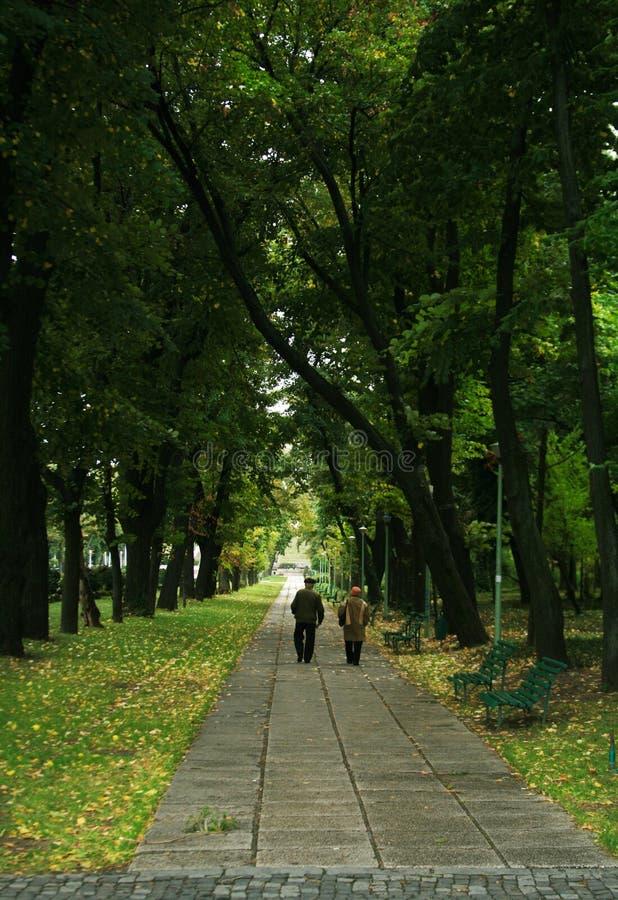 Callejón del otoño en el parque imagenes de archivo