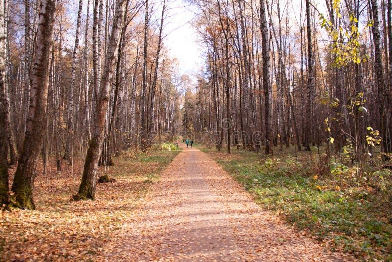 Callejón del otoño en un parque de la ciudad, una hierba y una hoja, humor triste, soledad, bancos imagenes de archivo