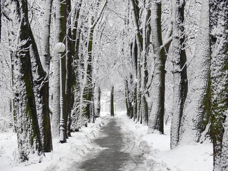 Callejón del parque cubierto con nieve fotografía de archivo