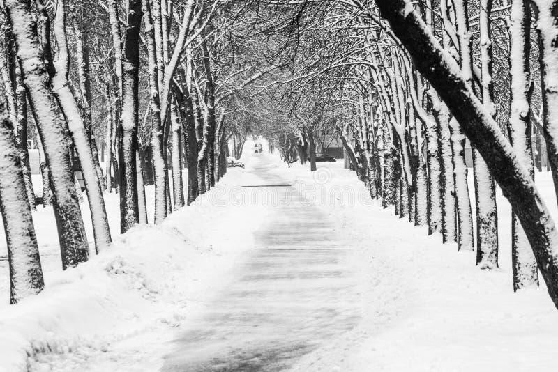 Callejón del parque Nevado en invierno imágenes de archivo libres de regalías