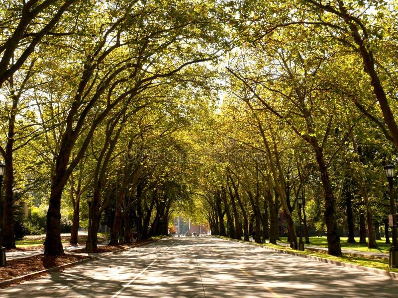 Callejón en campus de UW fotos de archivo