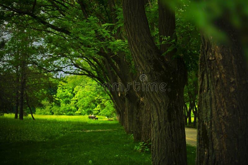 Callejón en el bosque del verano fotos de archivo