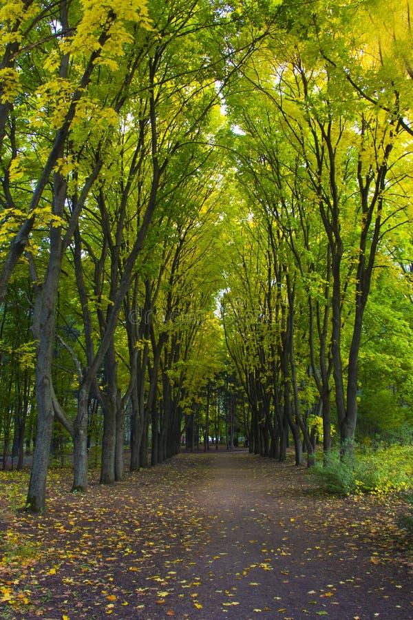 Callejón en el parque soleado del otoño fotografía de archivo libre de regalías