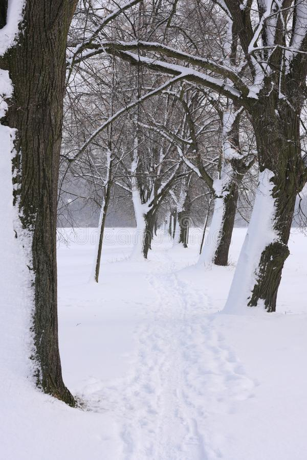 Callejón en invierno imágenes de archivo libres de regalías