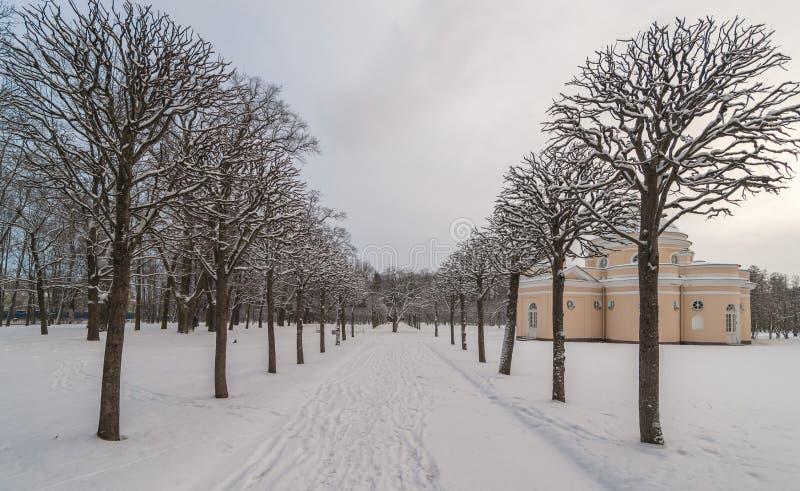 Callejón en parque del invierno fotografía de archivo libre de regalías