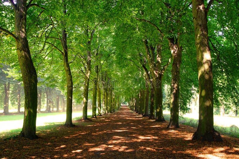 Callejón en parque. Palacio de Potsdam, Alemania fotos de archivo