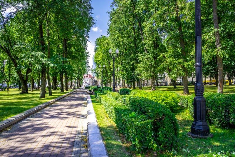 Callejón en un parque por completo de árboles en día de verano brillante en Minsk fotos de archivo