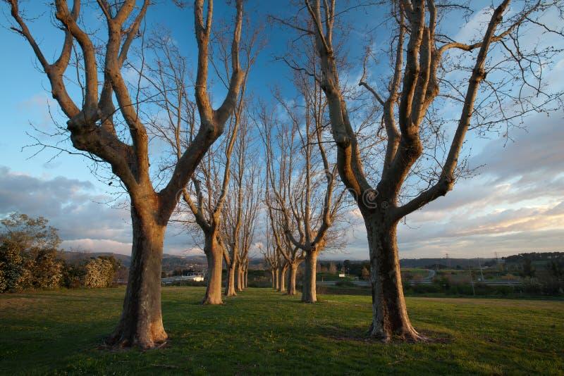 Callejón encantador del árbol plano fotografía de archivo libre de regalías
