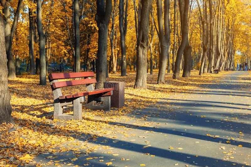 Callejón escénico hermoso con los bancos entre los árboles y el borrachín coloreado de oro del follaje en el parque de la ciudad  imagen de archivo libre de regalías