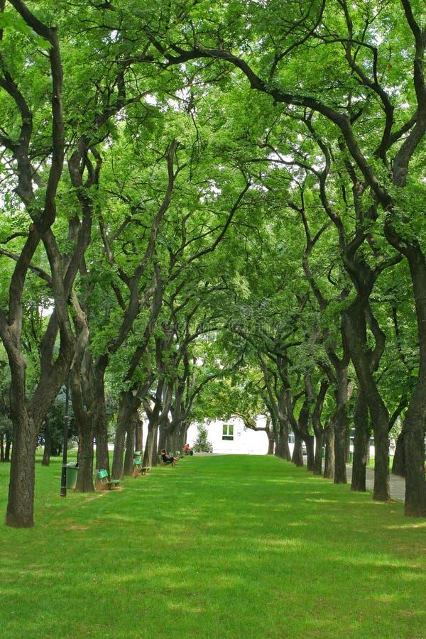 Callejón espectacular con los árboles en espiral arqueados. fotografía de archivo libre de regalías