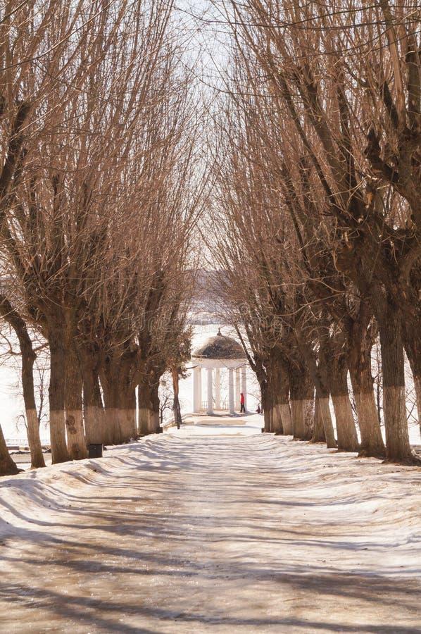 Callejón hermoso del invierno con los árboles sin las hojas fotografía de archivo libre de regalías