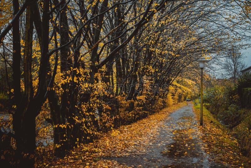 Callejón hermoso en un parque con las linternas Caída de la hoja, fondo natural del otoño foto de archivo libre de regalías