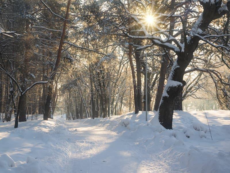Callejón iluminado por el sol en parque del invierno en la mañana imagen de archivo
