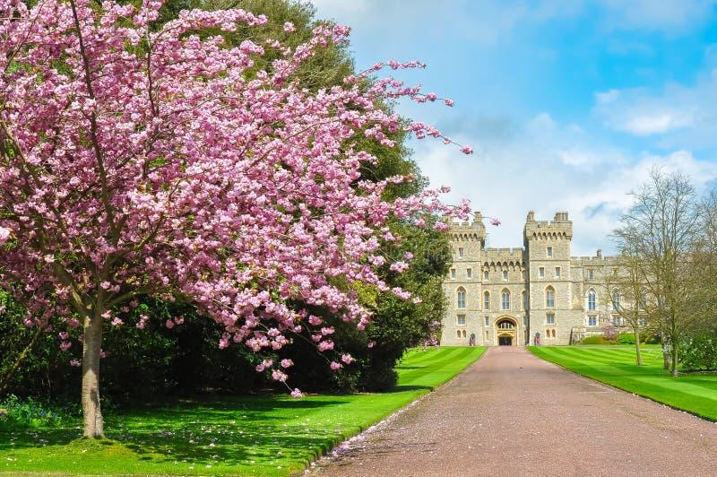 Callejón largo del paseo al castillo de Windsor en la primavera, suburbios de Londres, Reino Unido imagenes de archivo