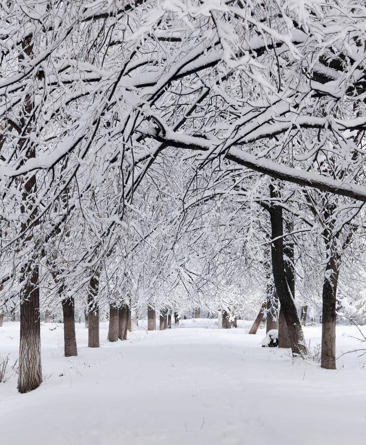 Callejón Nevado en el parque fotografía de archivo