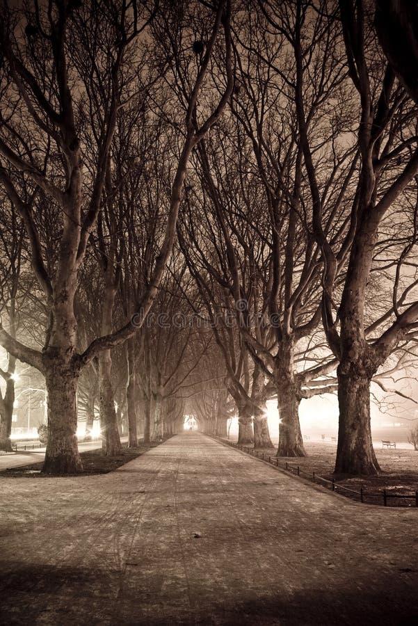 Callejón oscuro del parque imagenes de archivo