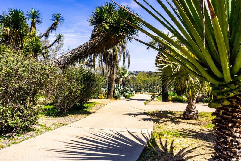 Callejón pavimentado alineado con los cactus y las palmeras, San Diego, California fotos de archivo libres de regalías