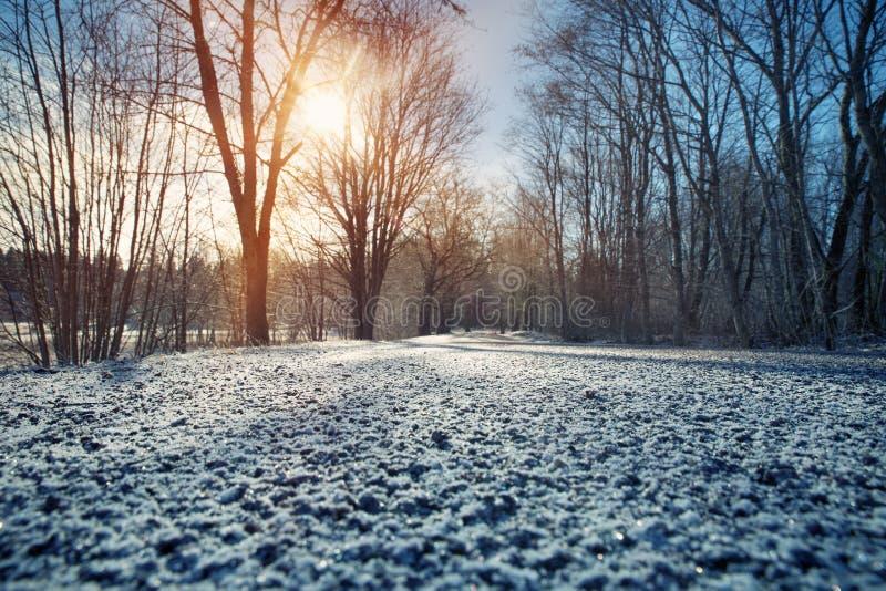 Callejón por mañana nevosa fotos de archivo