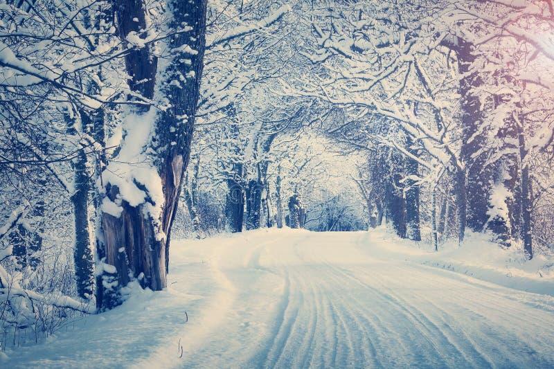 Callejón por mañana nevosa fotografía de archivo libre de regalías