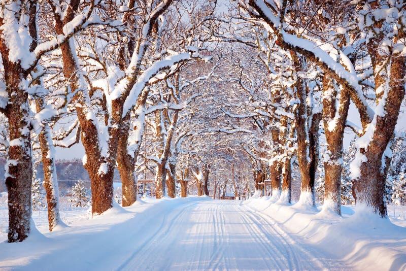 Callejón por mañana nevosa foto de archivo