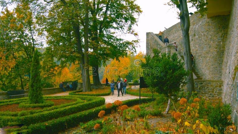 Callejón romántico hermoso en un parque con los árboles coloridos y la luz del sol fondo de la naturaleza del otoño - Bilder imágenes de archivo libres de regalías