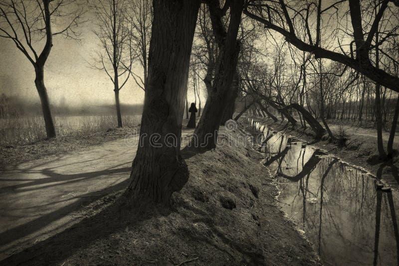 Callejón seco del árbol fotografía de archivo libre de regalías