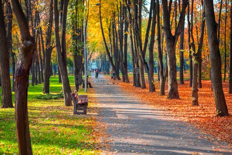 Callejón temprano escénico hermoso del otoño con los bancos entre los árboles y el borrachín coloreado de oro del follaje en el p imagen de archivo