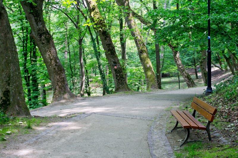 Callejón verde acogedor del parque con un banco de madera fotos de archivo libres de regalías
