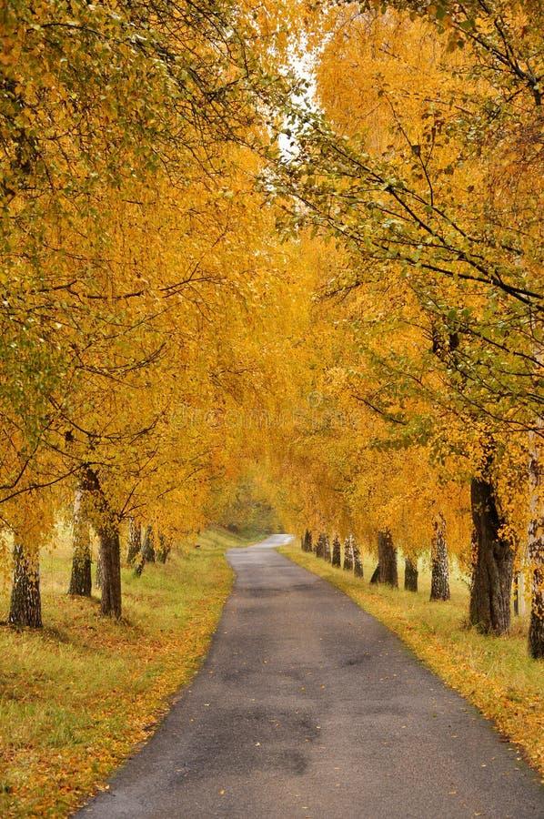 Callejón y camino hermosos del otoño imágenes de archivo libres de regalías