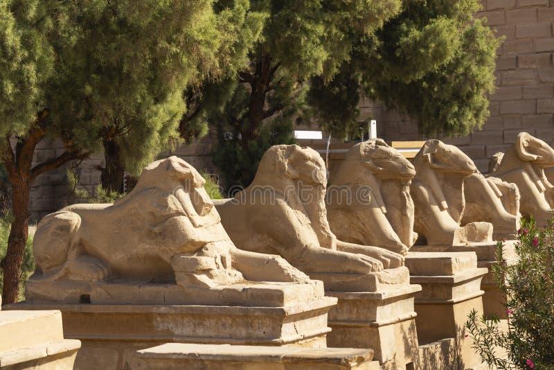 Callejuela de los delfines carneros Templo de Karnak Luxor, Egipto fotos de archivo libres de regalías