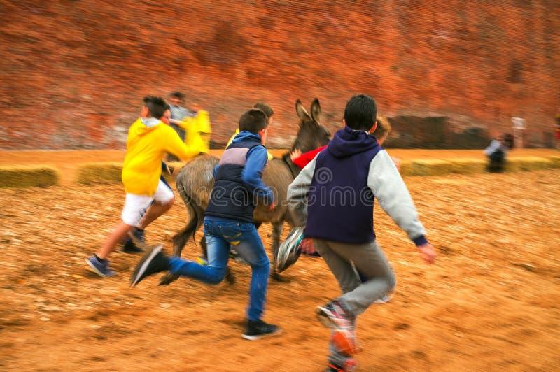 Calliano (Asti), gli asini corre Immagine di colore fotografia stock libera da diritti
