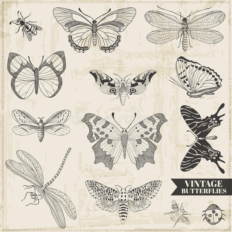 Calligraphic Hand drawn Butterflies stock illustration
