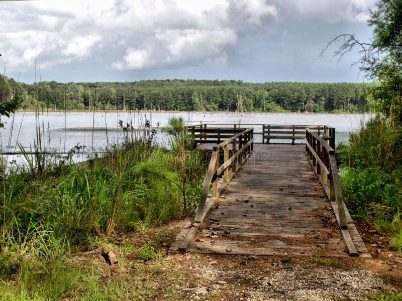 Calling Panther Lake stock image