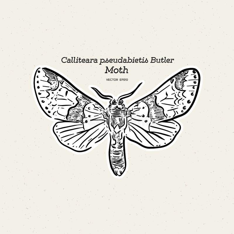 Calliteara pseudabietis男管家是家庭Erebidae的飞蛾 库存例证