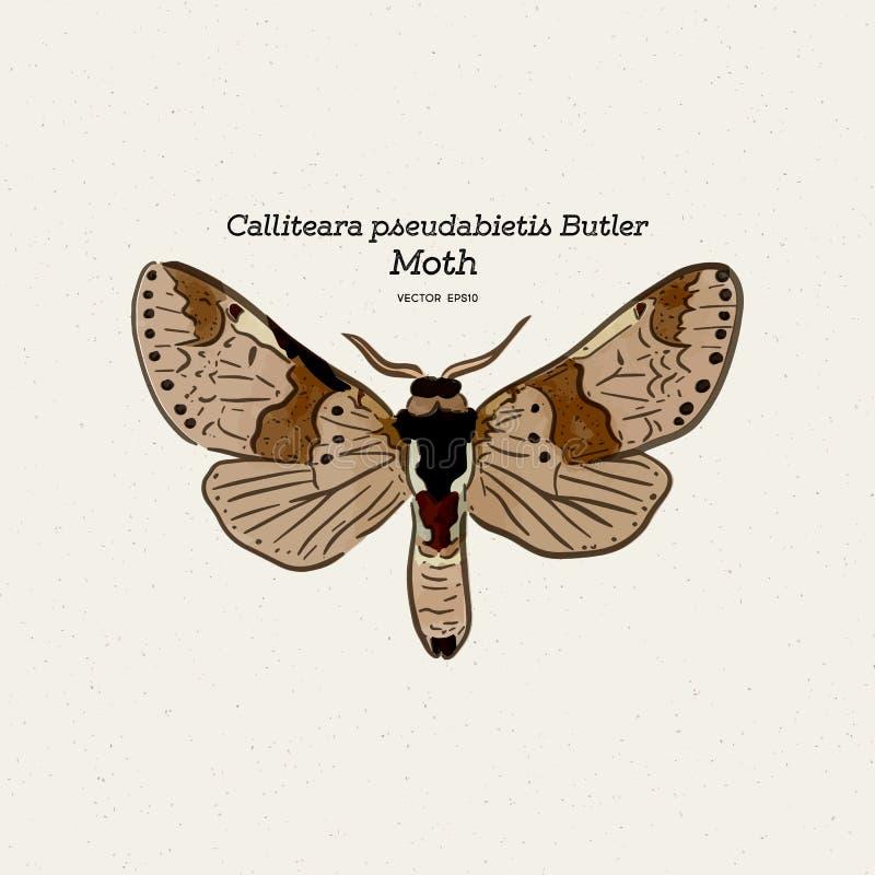 Calliteara pseudabietis男管家是家庭Erebidae的飞蛾 向量例证