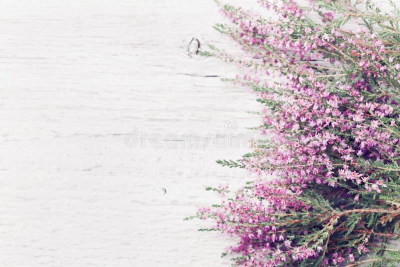 Calluna rose de frontière de fleur de bruyère vulgaris, Bruyère, ling sur la vue aérienne de table rustique blanche Carte de voeu images stock