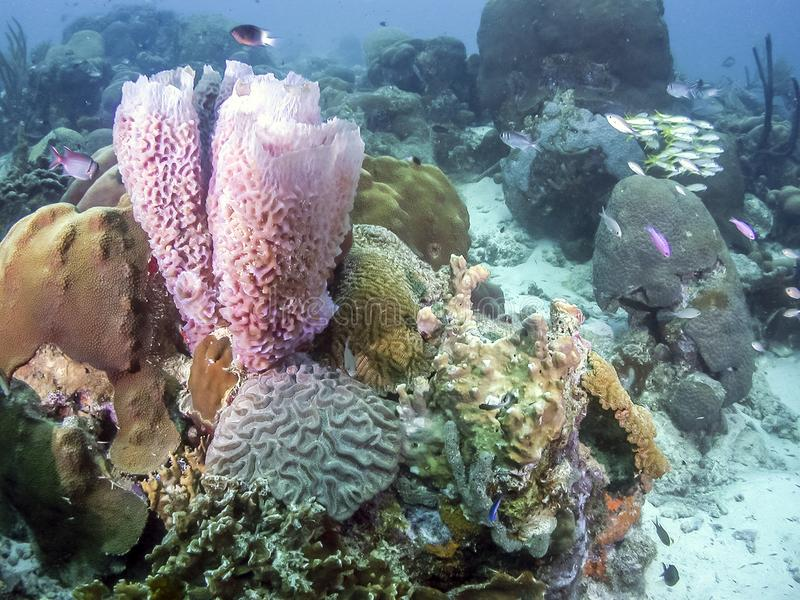 Azure Vase Sponge Stock Image Image Of Life Coral 120107469