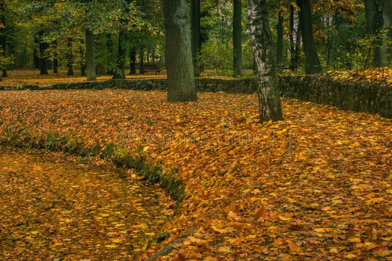 calm autumn landscape in the park royalty free stock images