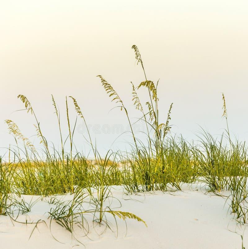 Calm beach with dunes and green grass stock photos
