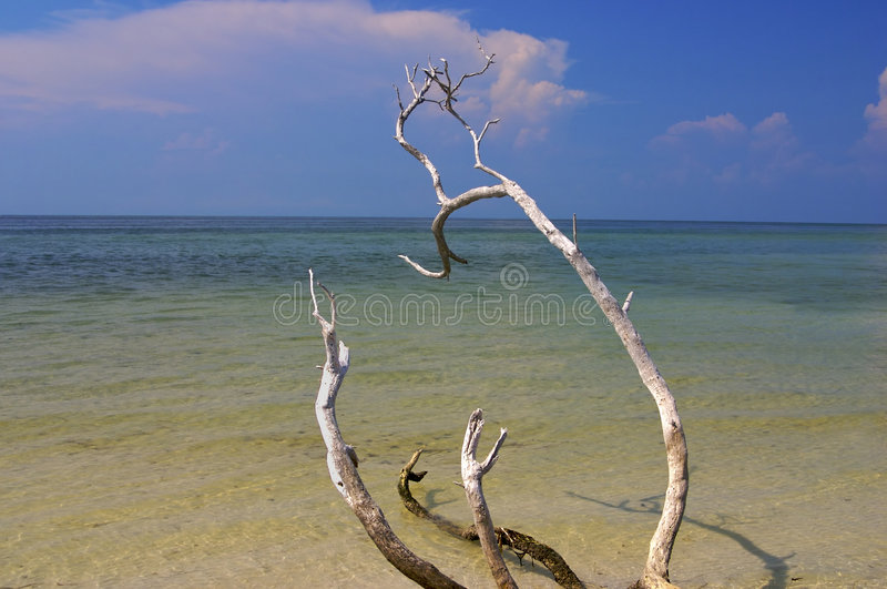 Download Calm beach with tree stock photo. Image of sand, location - 1708756