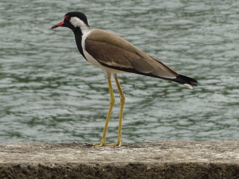 CALM BIRD stock photos