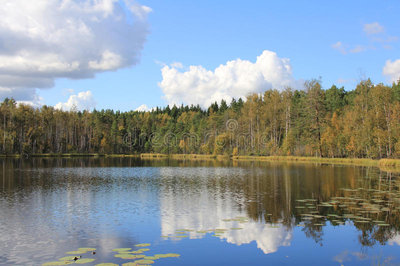 Calm Forest Lake in Finland royalty free stock photo