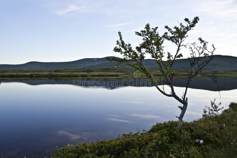 Download Calm lake stock image. Image of nobody, branch, clear - 19593269