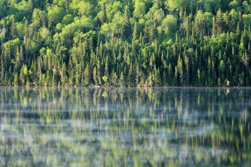 Download Calm lake stock image. Image of wild, mirror, green, trees - 25086459