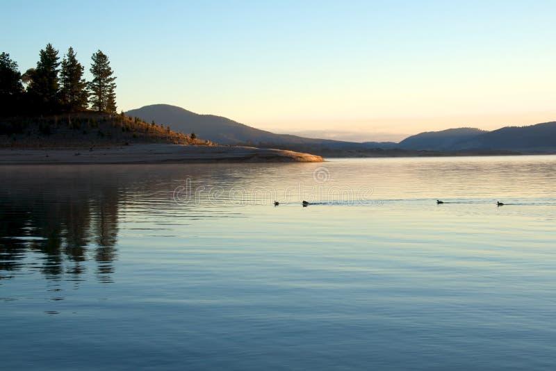 Download Ducks on lake at morning stock photo. Image of lake, fresh - 14221908