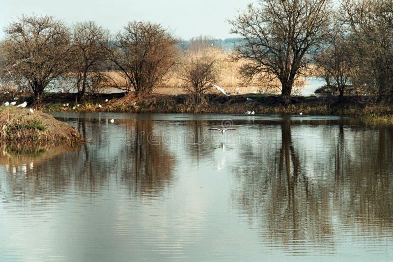 Calm Lake With Seagulls Stock Photo